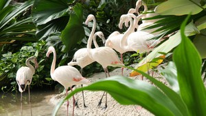 Tropical Islands flamingo